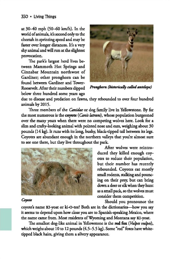 Pronghorn coyotes red foxes field guide