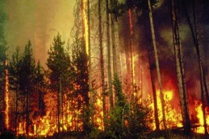 forest fire 1988 in Yellowstone