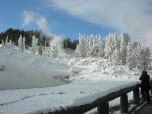 Mud Volcano trees in winter