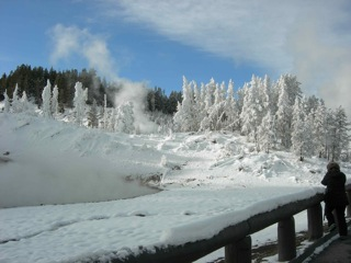Mud Volcano trees in winter