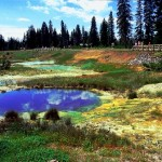 Mimulus Pools at West Thumb