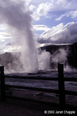 Whakarewarewa geysers
