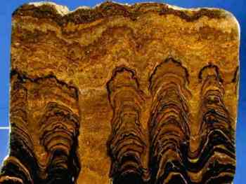 stromatolite cross-section