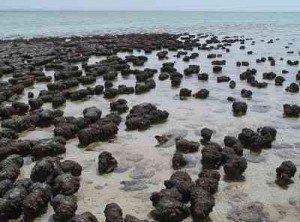 Australian stromatolites